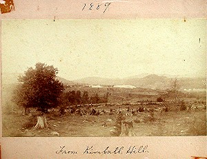 several Trees chopped down in large field in 1889
