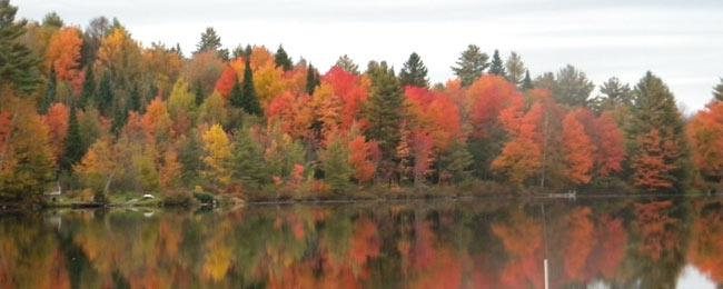 Fall Scene in Whitefield