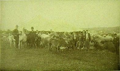 Horses, llamas, cows, and other animals in front of giant white tent
